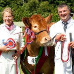 turriff show16cow